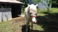 Paint horse, riding, trail riding, lessons, rescue, pony rides, horse boarding, Bonham TX, equine facility, quarter horse, cow ponies, grass pastures, pasture board, happy cows, grass fed beef, wildlife, trails, Missouri Fox Trotter