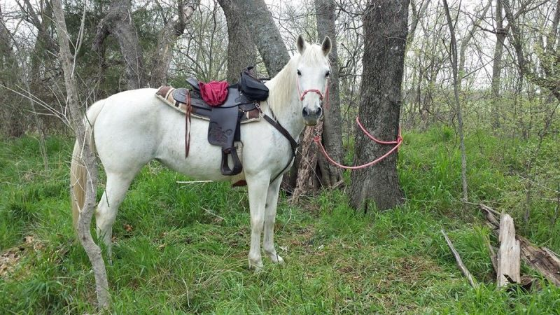 Paint horse, riding, trail riding, lessons, rescue, pony rides, horse boarding, Bonham TX, equine facility, quarter horse, cow ponies, grass pastures, pasture board, happy cows, grass fed beef, wildlife, trails, trail blazing